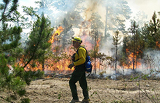 firefighter fighting a forest fire